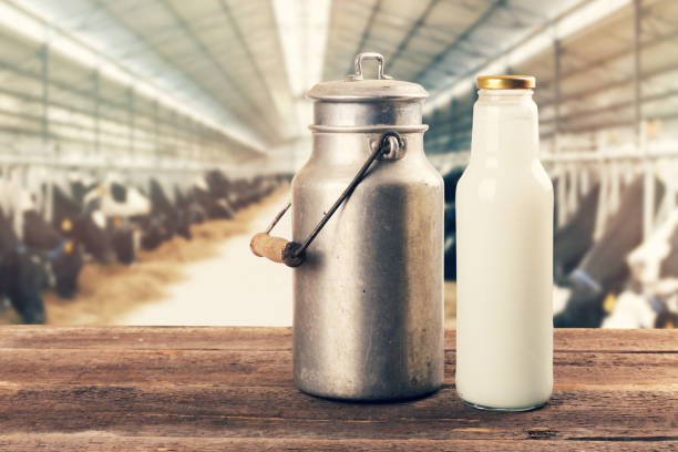 fresh milk bottle and can on the table in cowshed stock photo