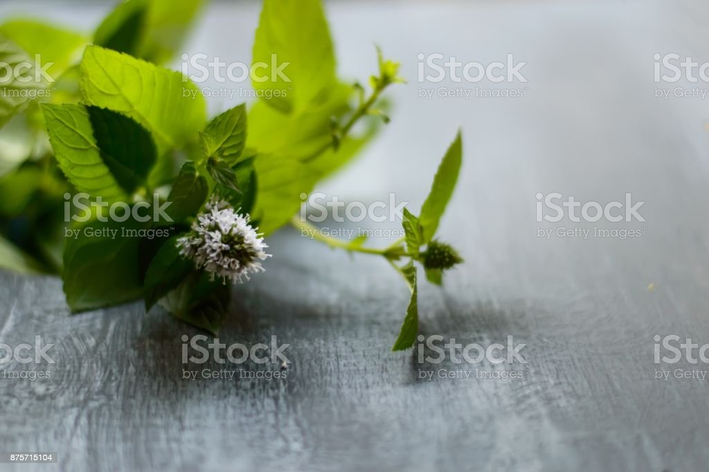 Fresh mint flower isolated closeup background with room for copy stock photo