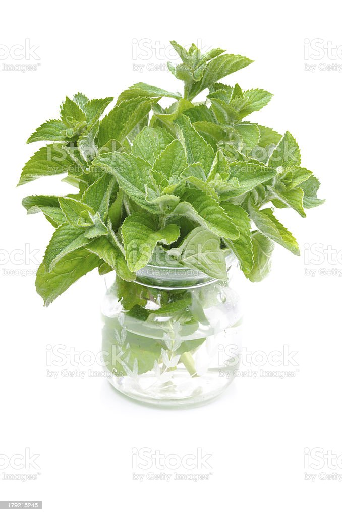 Fresh mint in a glass jar isolated on white royalty-free stock photo