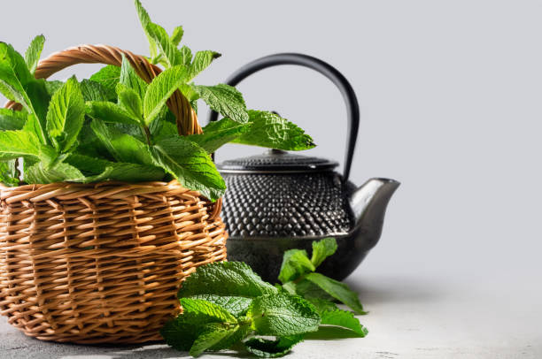 fresh mint in a wicker basket and tea pot, on a graduated background stock photo