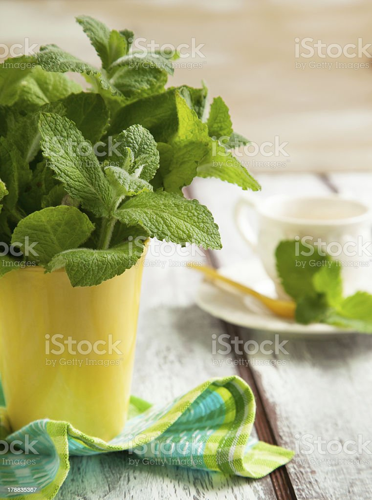 Fresh mint in cup royalty-free stock photo