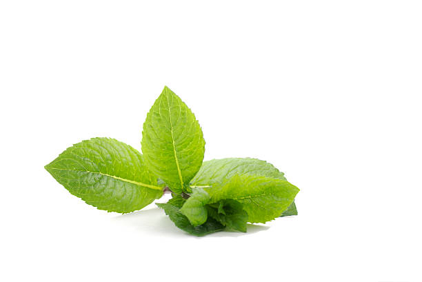 Fresh mint, isolated on white background, cocktail ingredient stock photo