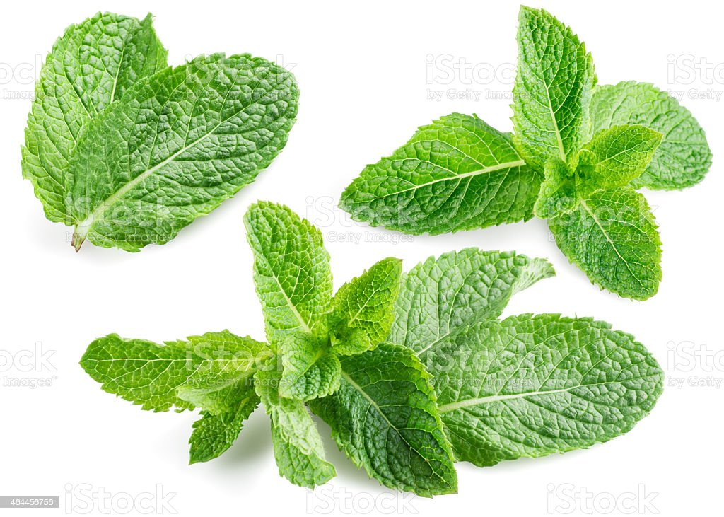 Fresh mint isolated on white. Collection stock photo