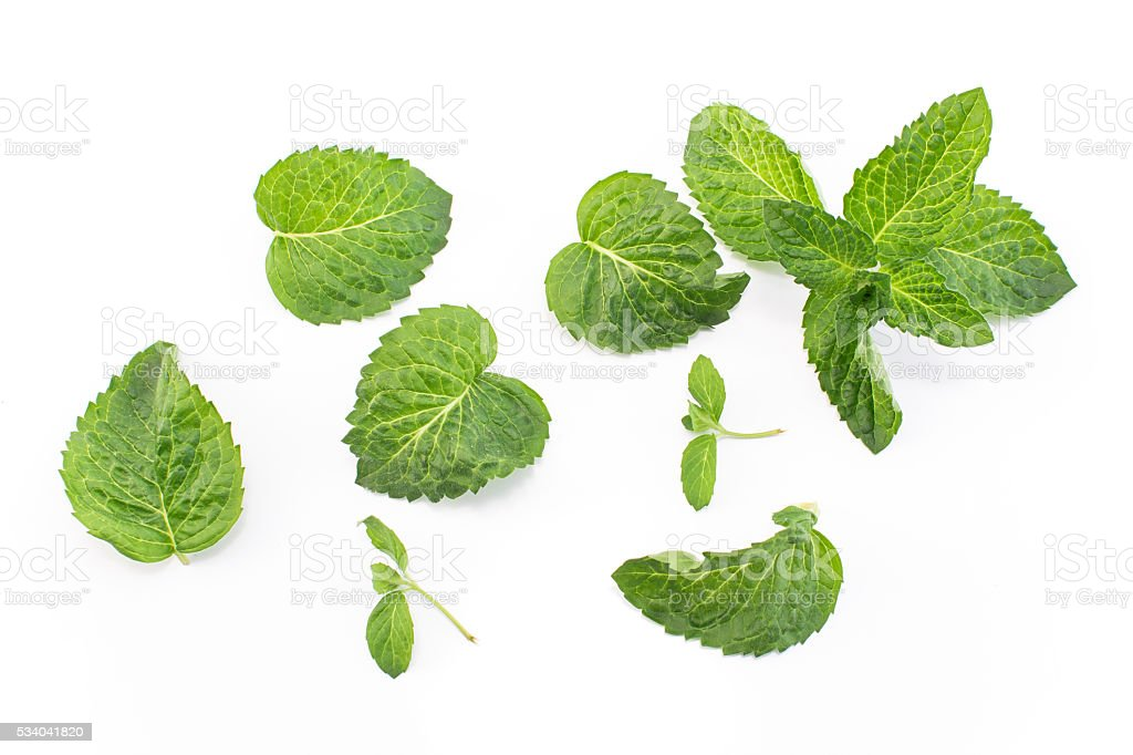 Fresh Mint Isolated on White stock photo