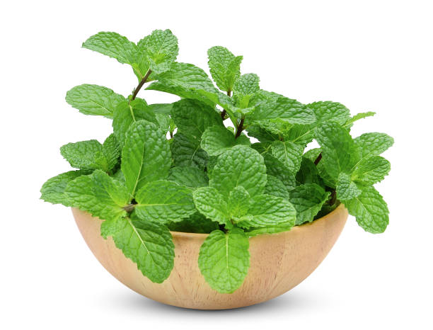 fresh mint leaf in the wooden bowl isolated on white background – zdjęcie