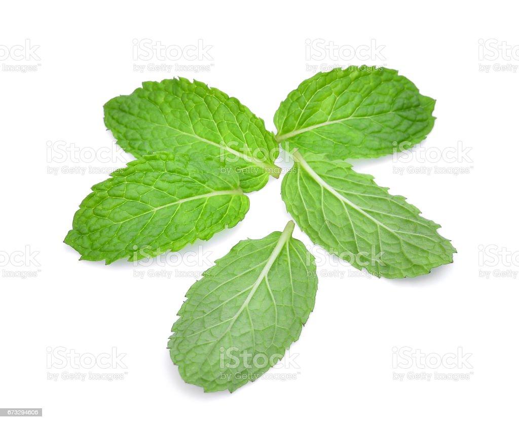 fresh mint leaf isolated on white background royalty-free stock photo