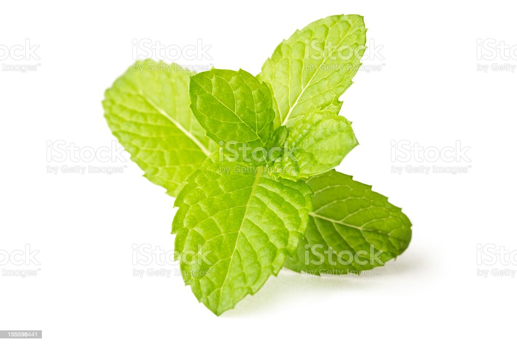 Fresh mint leaf isolated on white in macro stock photo