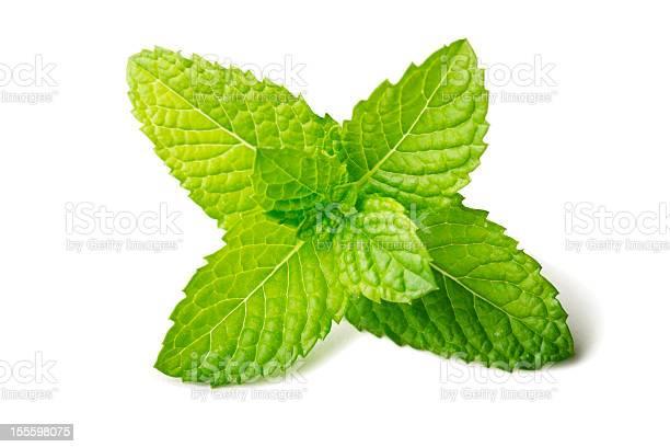 Photo of Fresh mint leaf isolated on white