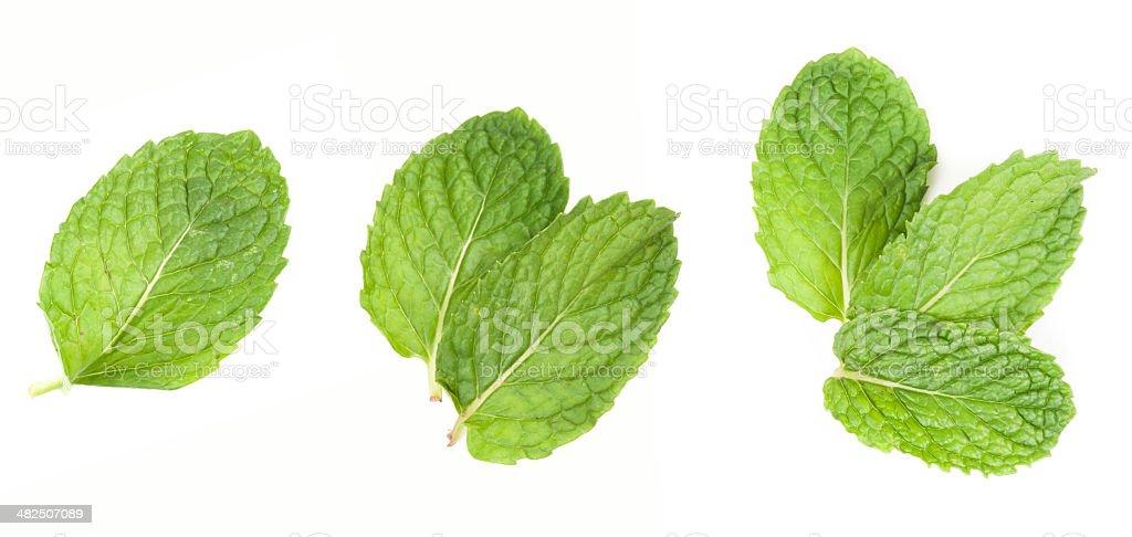 fresh mint leaves isolated on white background. Studio macro royalty-free stock photo