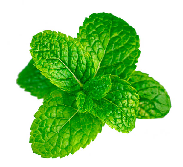 fresh mint leaves isolated on white - liść mięty przyprawa zdjęcia i obrazy z banku zdjęć