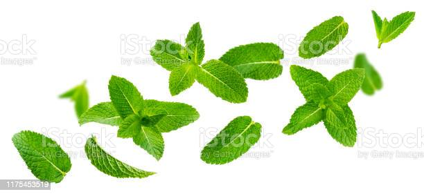 Photo of Fresh mint leaves, peppermint foliage isolated on white background