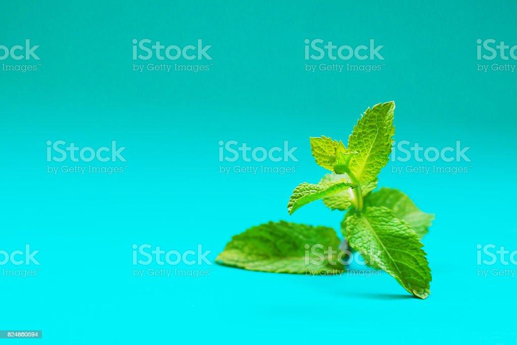 Fresh mint on turquoise background stock photo