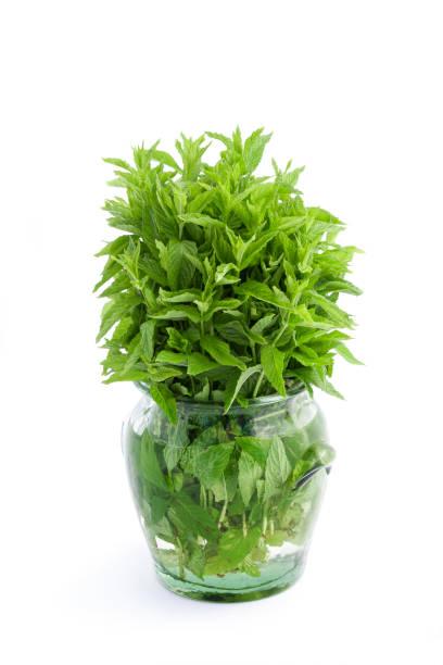 fresh mint - menta erba aromatica foto e immagini stock