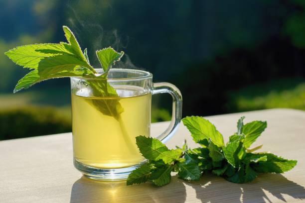 Fresh mint tea on the garden table stock photo