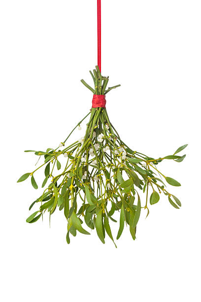 Fresh mistletoe hanging on a red ribbon stock photo
