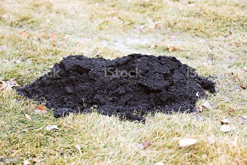 Fresh Molehill in Spring stock photo