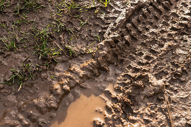 fresh mountain bike tyre track in wet mud - bike tire tracks foto e immagini stock