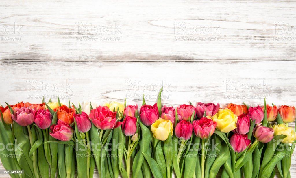Fresh Multicolor Tulips Spring Flowers Wooden Background Stock Photo