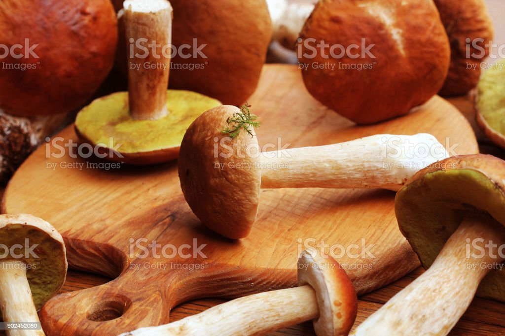 Fresh mushroom boletus edulis on cutting board stock photo