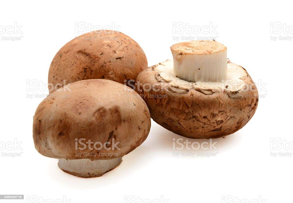 fresh mushroom on a white background royalty-free stock photo