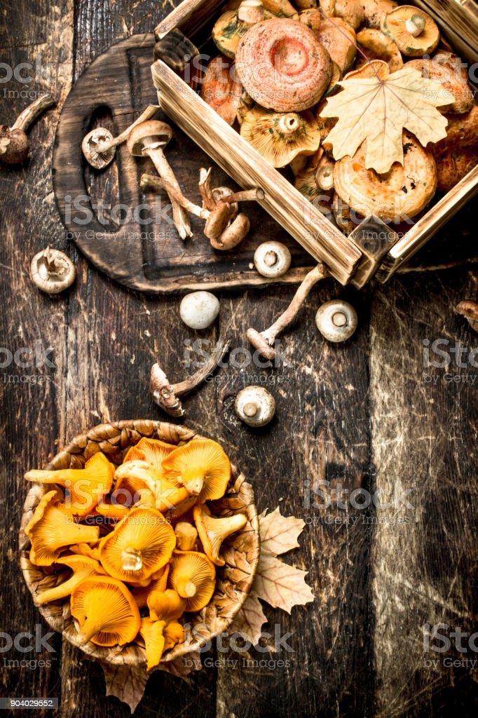 Fresh mushrooms, honey agarics and chanterelles. stock photo