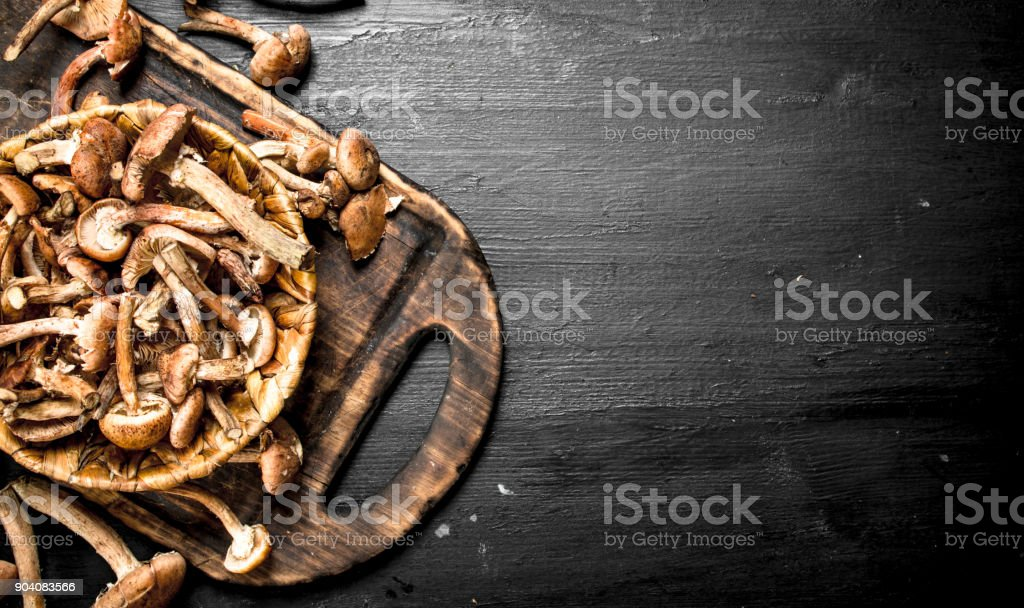 Fresh mushrooms honey agarics in basket. stock photo