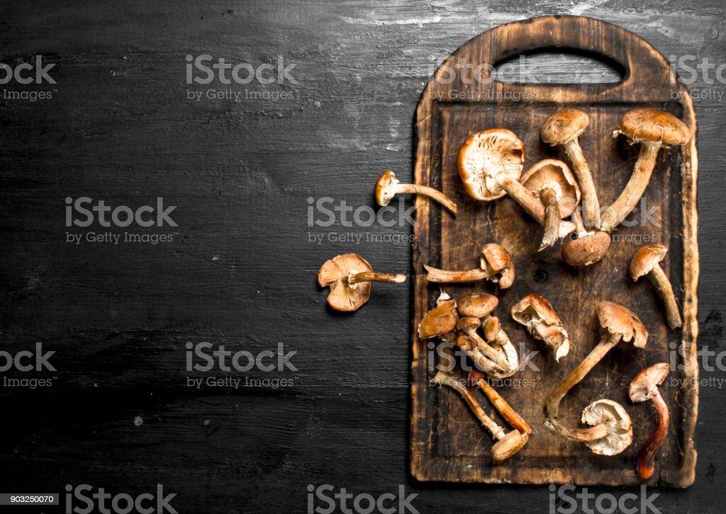 Fresh mushrooms honey agarics on the board. stock photo