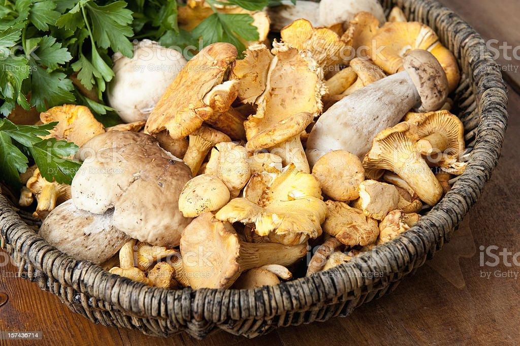 Fresh Mushrooms in a Basket stock photo