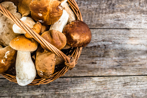 Fresh mushrooms in basket, boletus from forest harvested in autumn season