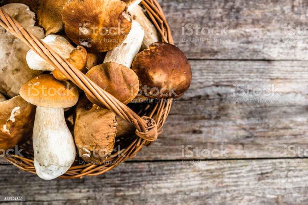 Fresh mushrooms in basket, boletus from forest harvested in autumn season stock photo