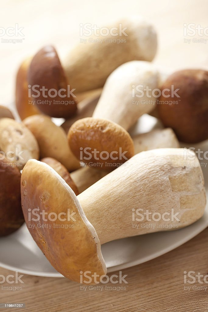 fresh  mushrooms stock photo