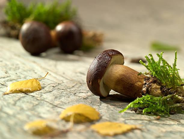 Fresh Mushrooms. stock photo