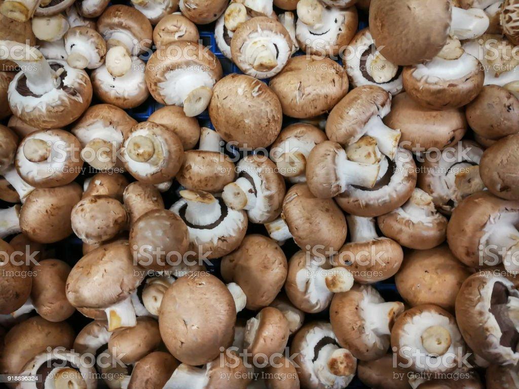 Fresh mushrooms – zdjęcie