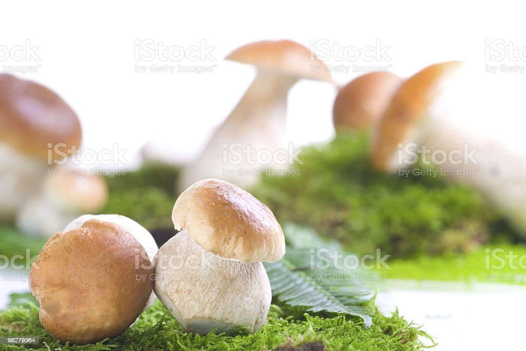 Fresh mushrooms royalty-free stock photo