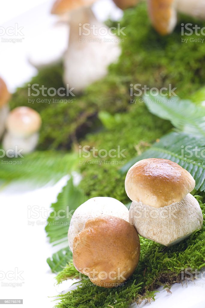 Fresh mushrooms royalty-free stock photo