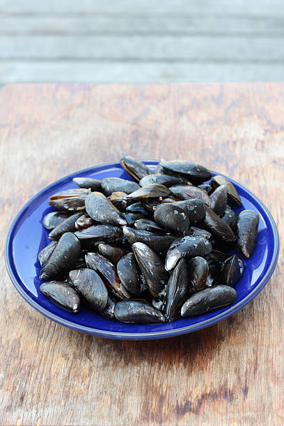Fresh mussels. stock photo