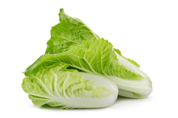fresh napa cabbage on white background. - 椰菜 個照片及圖片檔