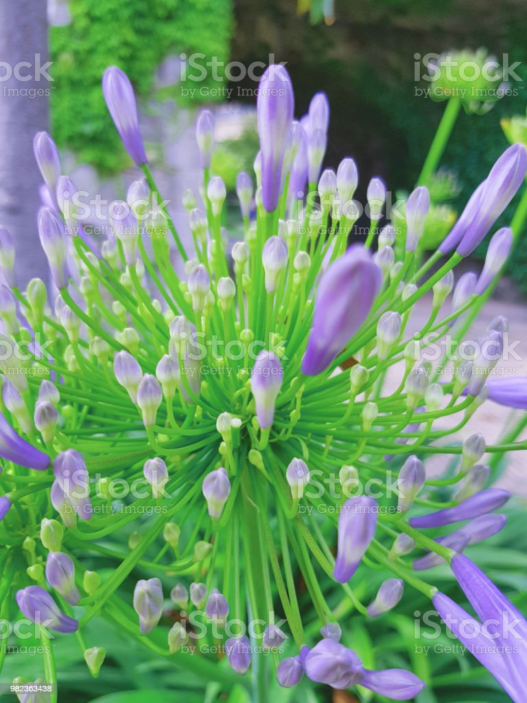 Fresh natural flower in bright day beautiful spring purple flowers fresh natural flower in bright day beautiful spring purple flowers in the garden background izmirmasajfo