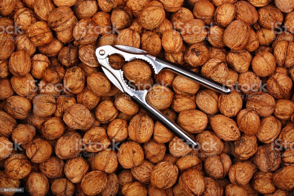 Fresh natural walnuts and nutcracker stock photo