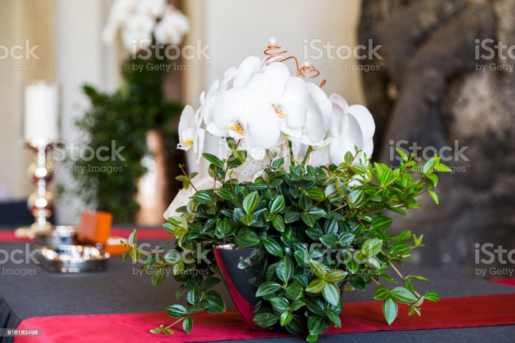 fresh natural white orchid flower with a green leaves in vase stock photo