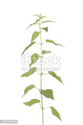 538450883istockphoto Fresh nettle. High nettle plant 1072103156