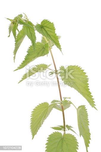 538450883istockphoto Fresh nettle. High nettle plant 1072104228