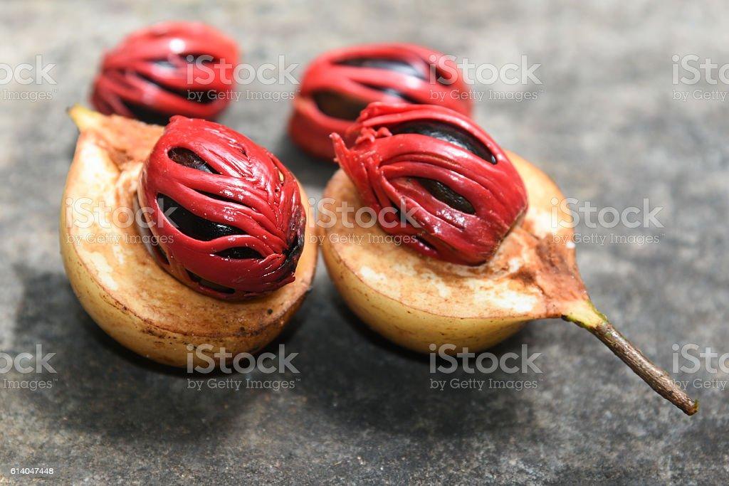 Fresh Nutmeg spice Kerala India stock photo