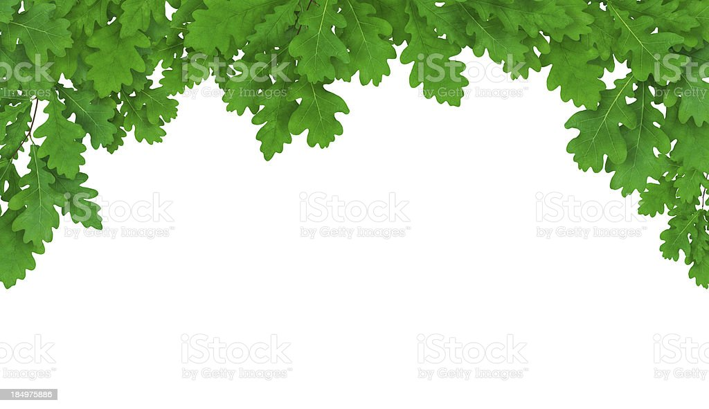 Fresh Oak Frame stock photo