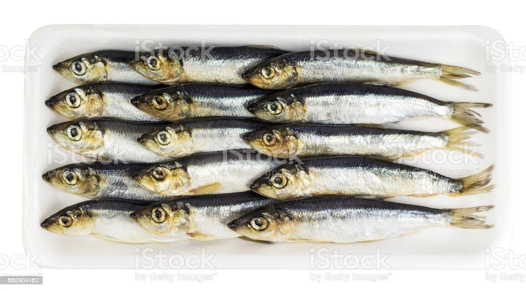 Fresh ocean sprat Lizenzfreies stock-foto