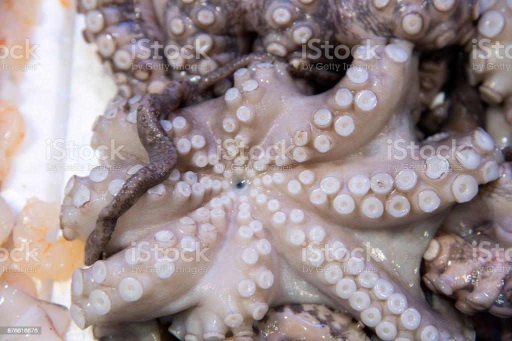 Fresh octopus on display at fish market stock photo
