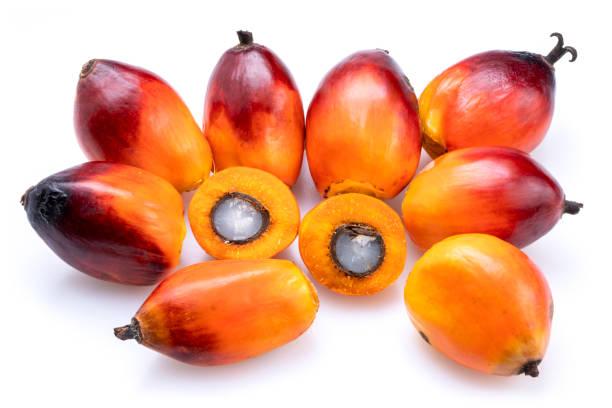 fresh oil palm fruits isolated on the white background. - palm oil bottles imagens e fotografias de stock