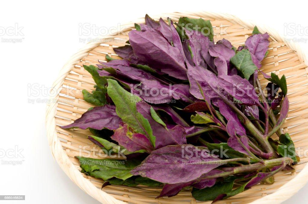 Verse spinazie van Okinawa royalty free stockfoto
