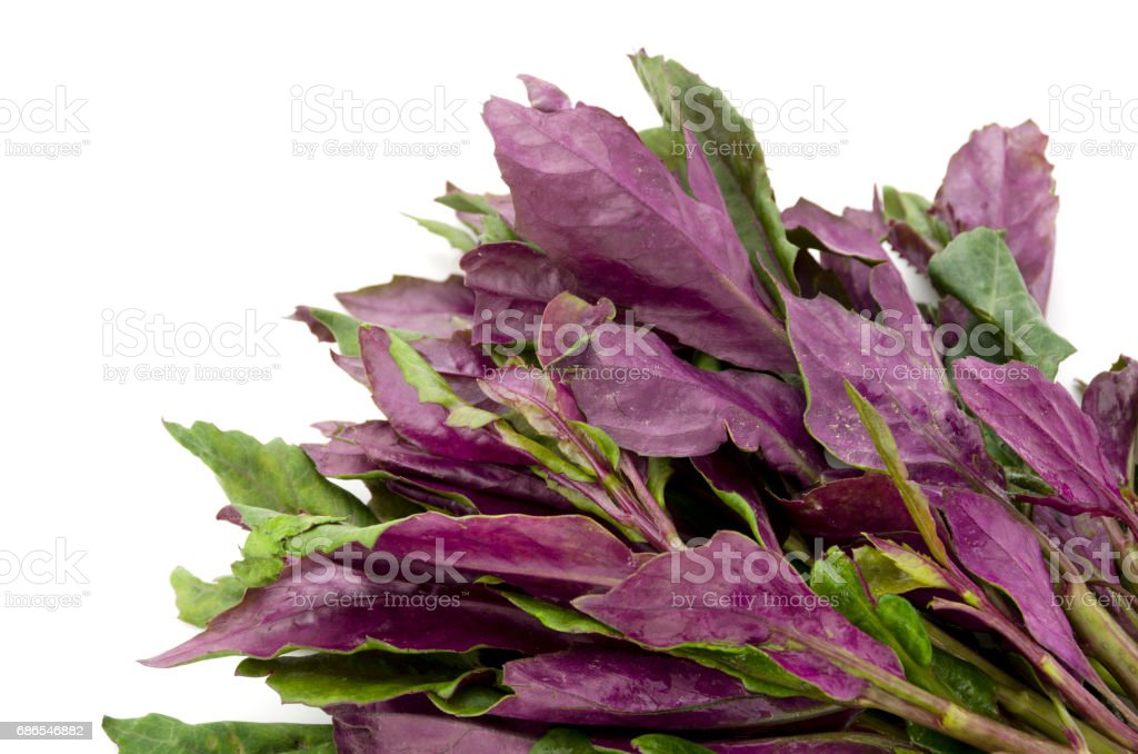 Fresh Okinawan spinach foto stock royalty-free