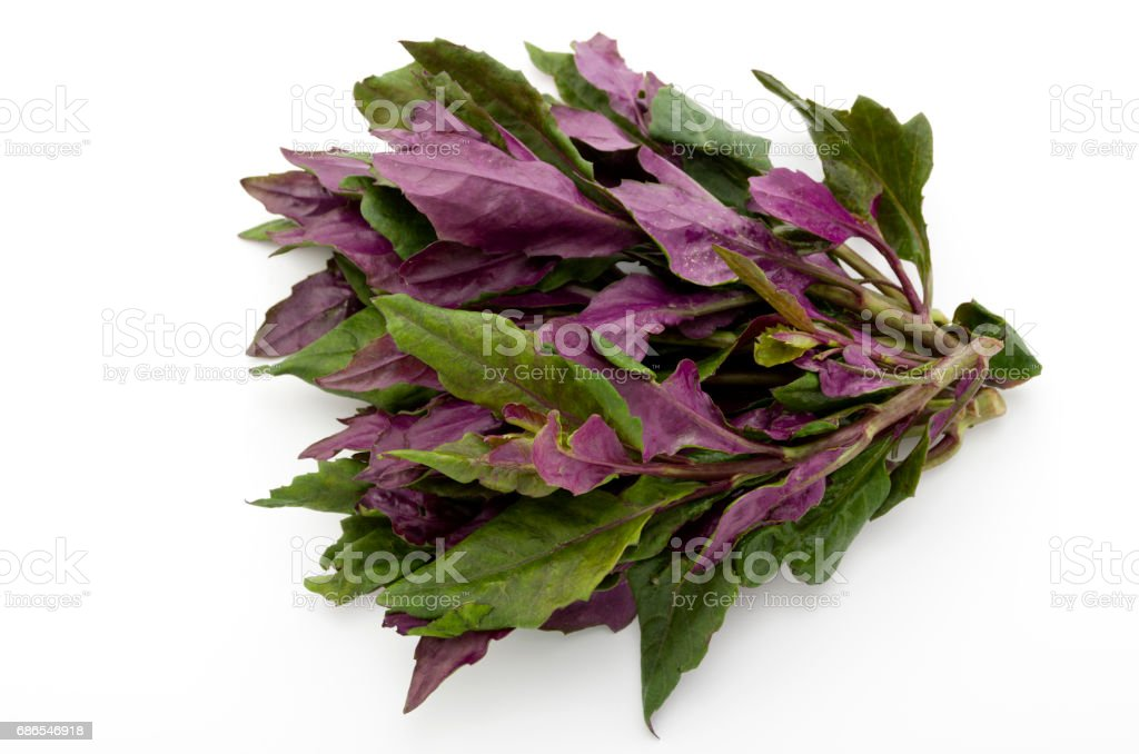Fresh Okinawan spinach royalty-free stock photo